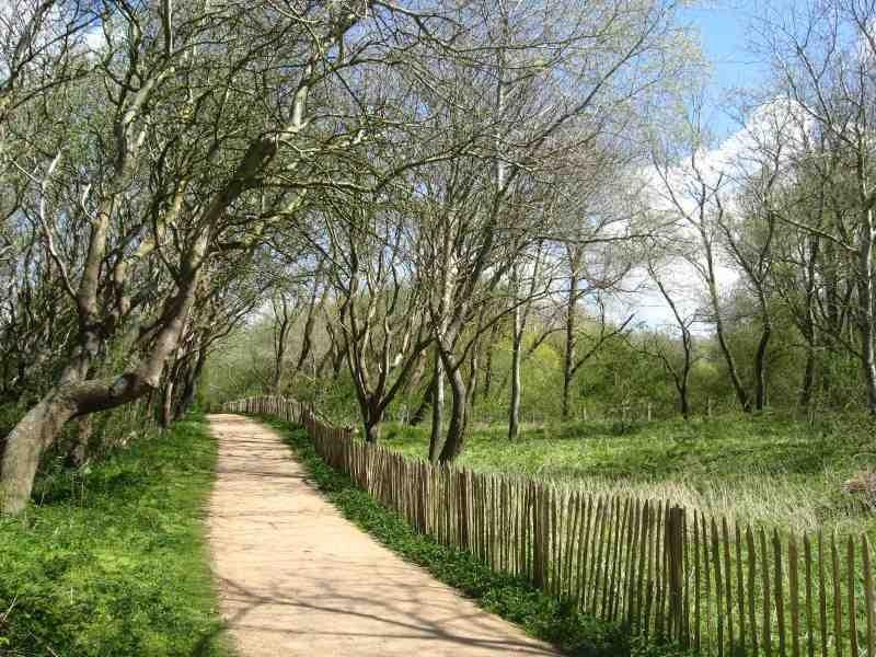 Het Duinenbos in De Haan